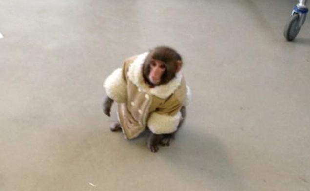 Toronto Monkey Sports Fur Coat in Parking Lot